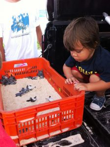 baby sea turtles in Cozumel